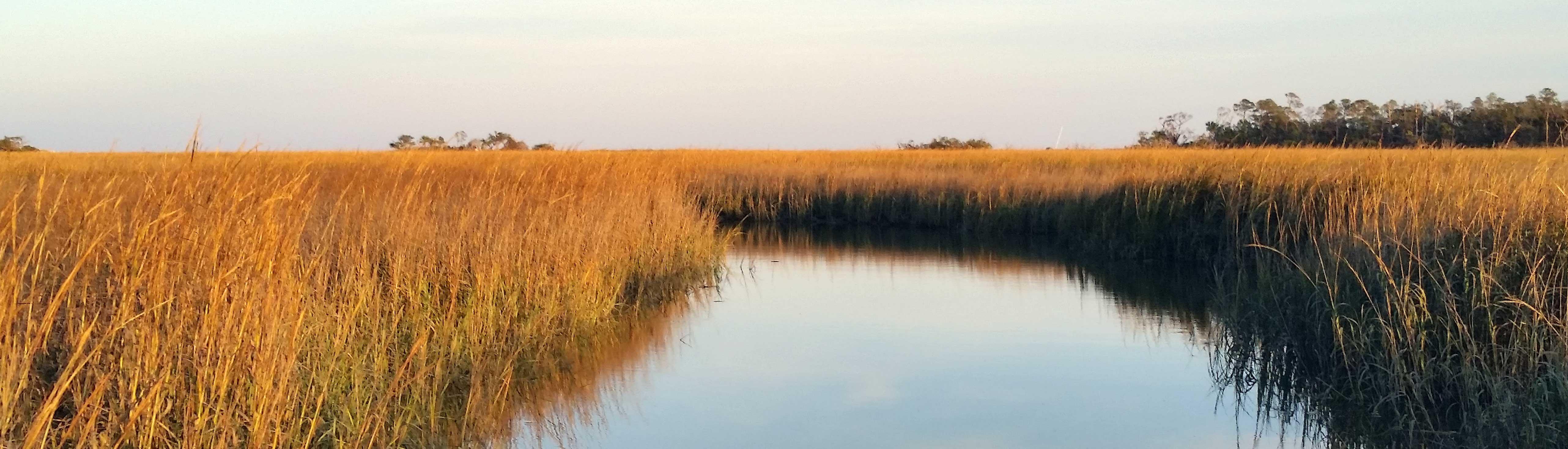 Tybee Island Marsh Grass